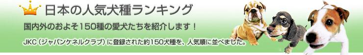 日本の犬種ランキング