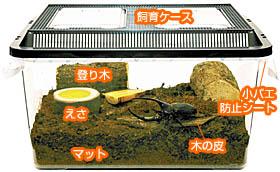カブトムシ 飼育