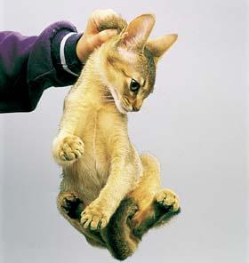 猫の機嫌は尻尾でわかる!!8つの振り方を覚えていつ …